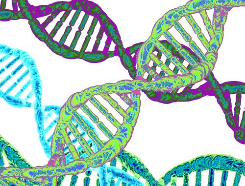 Умножение молекул ДНК методом ПЦР